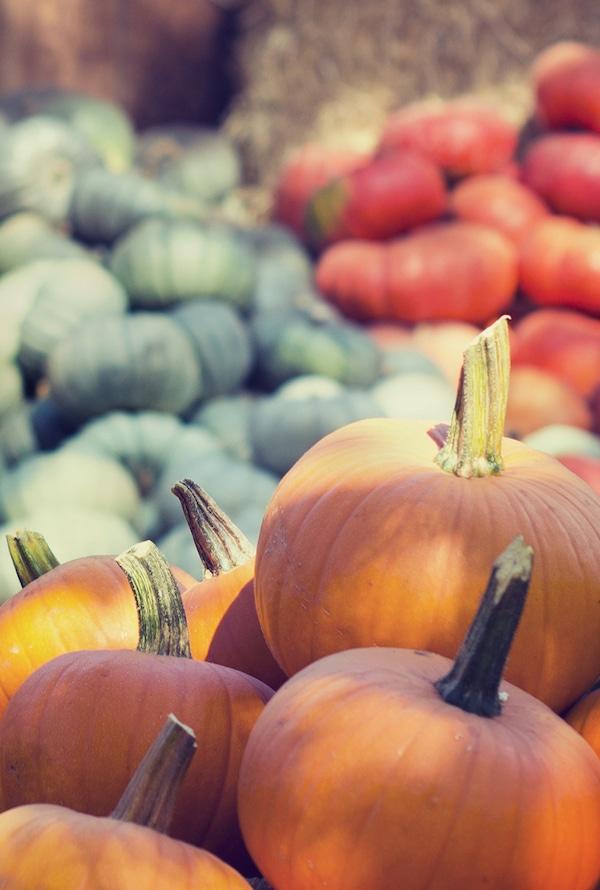 Fall Halloween Pumpkins